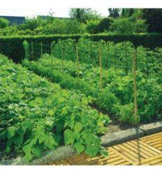 Malla entutor trellinet 35/2x100 verde de nortene